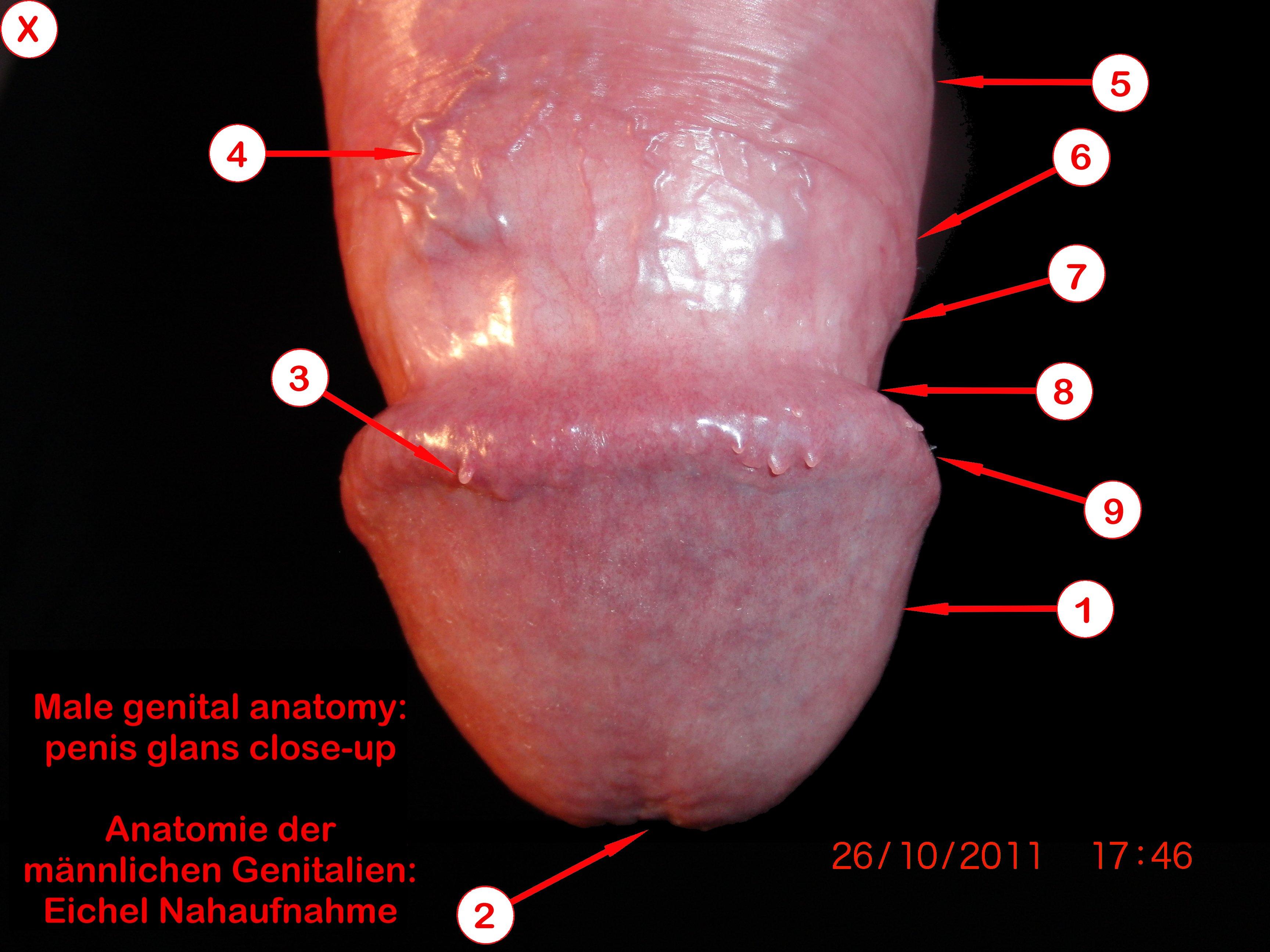 A háziállatok funkcionális anatómiája | Digitális Tankönyvtár