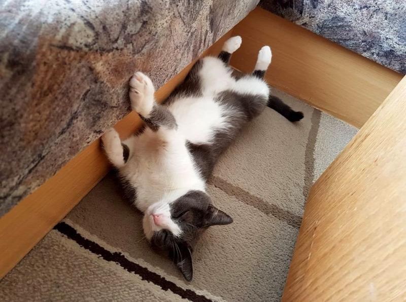 Tudja-e, hogy miért nyújtózkodnak annyit a macskák?