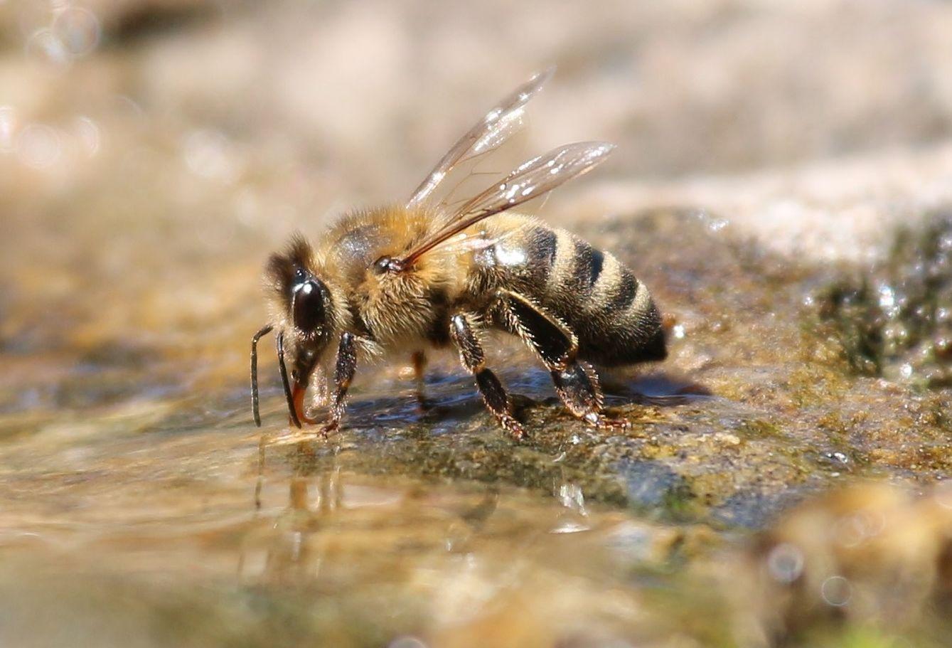 Méhek etetése