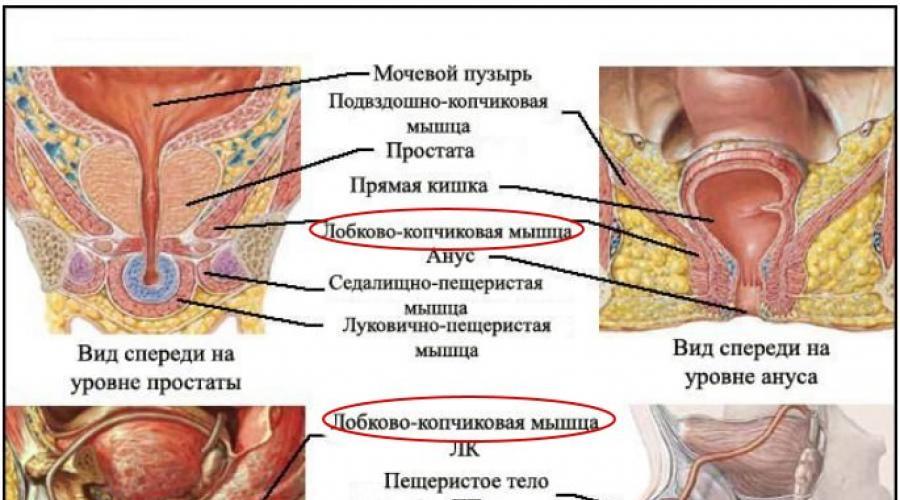 az erekció gyors helyreállítása otthon amikor az erekció vérzik a péniszből