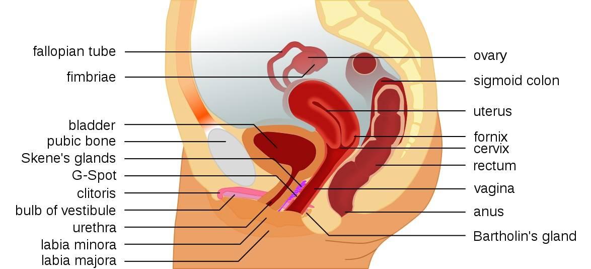 Intimreflexzónák – Mindent a szexuális reflexpontokról