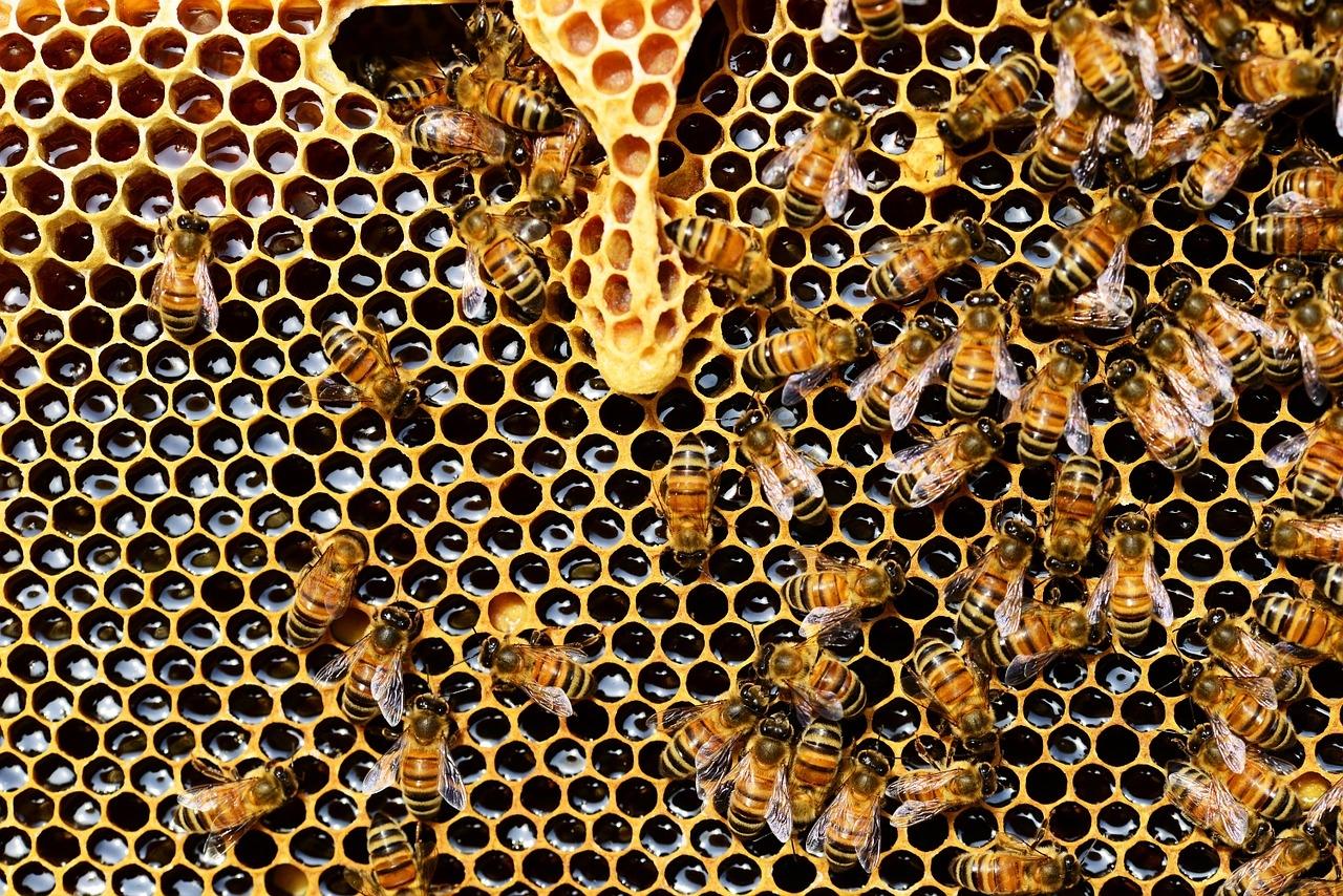 méhek felállítása az erekció hirtelen csökkenése