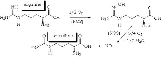 A nitrogén-monoxid