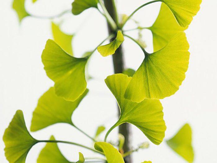 A kapor hasznos tulajdonságai: a közönséges zöldek váratlan lehetőségei