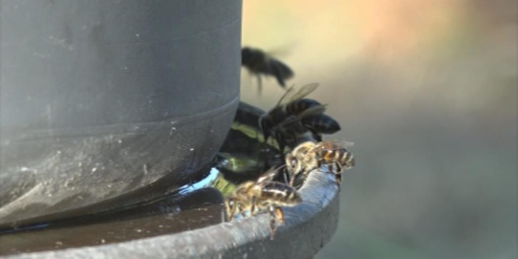 Éljenek a méhek!