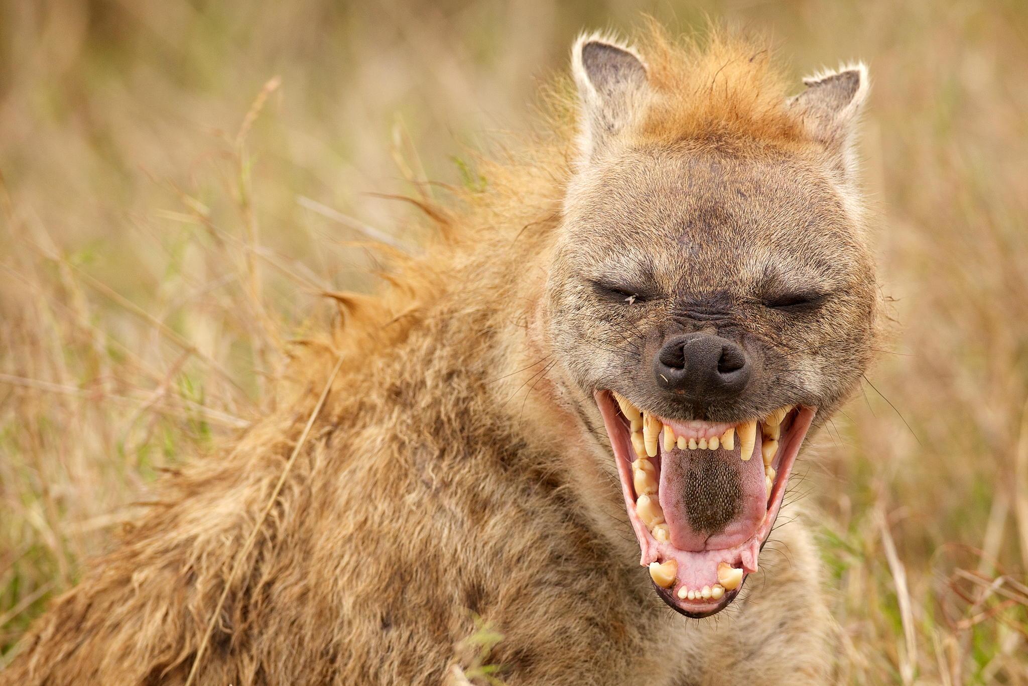 Brehm: Az állatok világa / TIZENHETEDIK REND: Erszényes emlősök (Marsupialia)