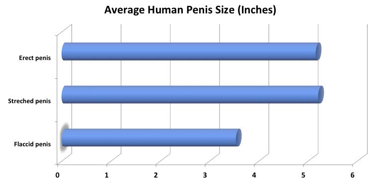 a pénisz hosszával mérve