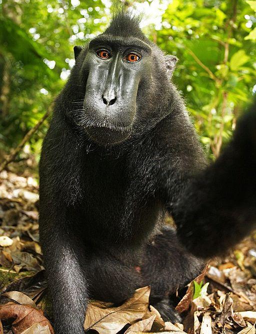 majom felállítása