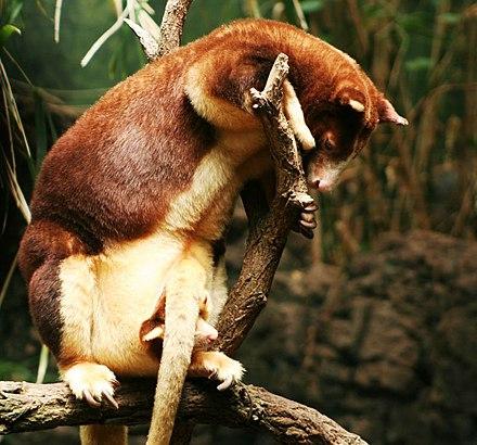 Szex az állatvilágban – legérdekesebb felfedezései   National Geographic