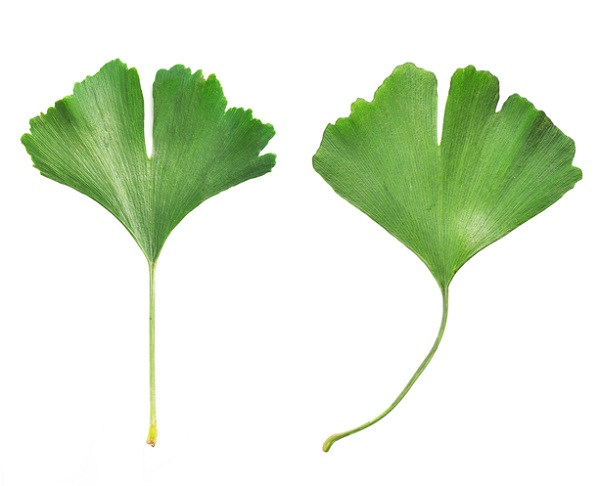 a fehérjék hatása az erekcióra nincs erekció a közösülés után