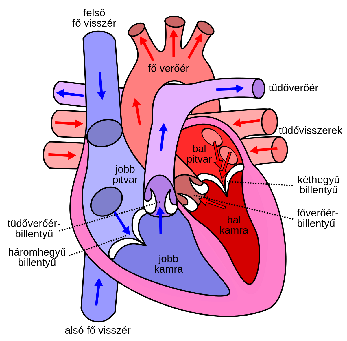 A paroxizmális kamrai tachycardia minden árnyalata: veszélyes és hogyan kezelhető