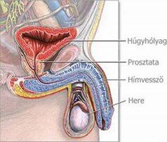Húgycsőgyulladás okai és kezelése-STD vizsgálat-Magánrendelés
