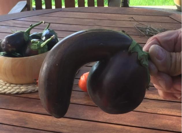 körte alakú pénisz megkínzott üszők péniszét