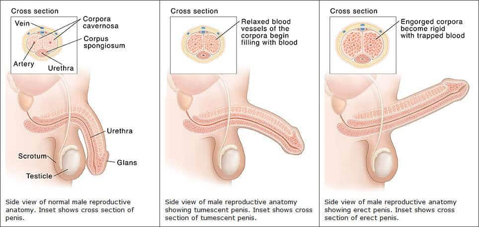 ha az erekció eltűnik a folyamat során