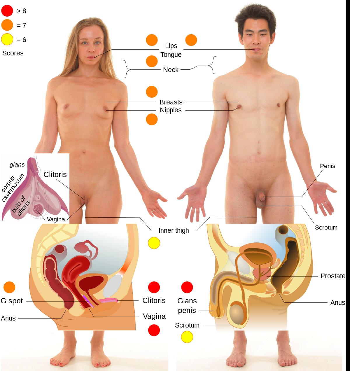 30 erogén zóna a férfi testen