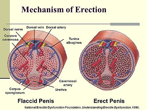 az erekció a közösülés során alábbhagy